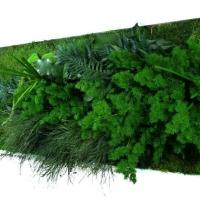 Nature Panoramic XL