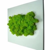 POP-vert