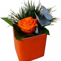 Color Pot - Orange