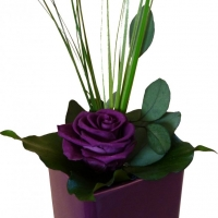 Color Pot - Violet